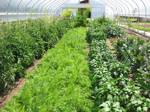 Greenhouse-Rows