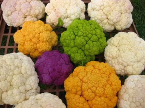 Colorful-Cauliflower