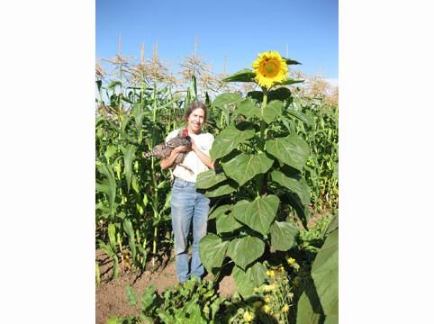 Cyndee-Sunflower