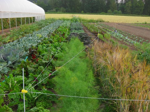 Farm-Fields-2